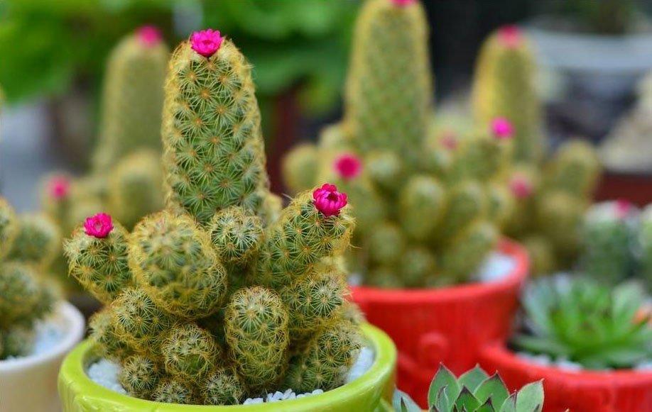 防辐射植物有哪些