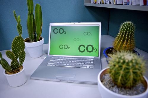 室内防辐射植物