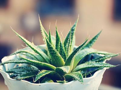 电脑防辐射植物