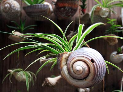 防辐射植物:吊兰