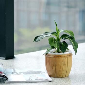喜阴的防辐射植物有哪些